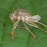 Buitenaards insect