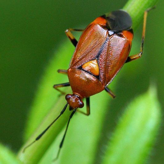 www.insectenparadijs.nl