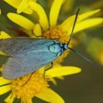 metaal-vlinder