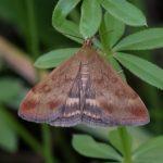 Nachtvlinder - onbekend
